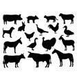 set silhouettes domestic farm animals vector image vector image