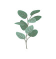 twig with green leaves floral design element vector image
