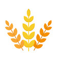 ears wheat agriculture food natural vector image