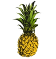 Hand drawn pineapple vector image vector image