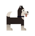 husky is stand vector image vector image