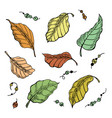 leaf nature sketch plant isolated graphic vector image vector image