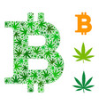 bitcoin composition of weed leaves vector image