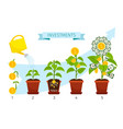 investments process with money tree growing vector image vector image