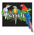 parrots with palm leaves vector image