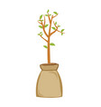 tree plant in ground bag vector image
