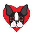 boston terrier face vector image