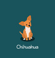 an depicting chihuahua dog cartoon vector image