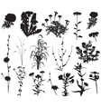 collection silhouettes different species flowers vector image vector image
