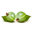 Green gooseberries vector image