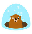 groundhog at winter icon flat style vector image vector image