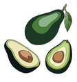 whole avocado with leaf and half with seed vector image vector image