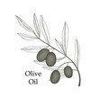 olive tree branch berries isolated vegetable vector image vector image