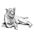 original artwork old lioness black sketch drawing vector image vector image