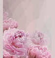 pink background with pink peony blossoming flowers vector image
