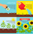 planting process growing sunflowers vector image