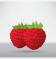 raspberry on a white background vector image
