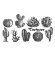collection desert plants cactus set vintage vector image vector image