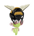 bumblebee on a flower vector image vector image