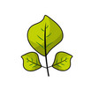 natural leaves botany of tropical plant vector image vector image