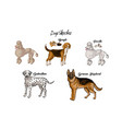 dogs sketches set dogs of different breeds vector image