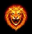 Fair Lion 01 vector image vector image