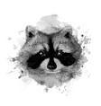 raccoon head vector image vector image