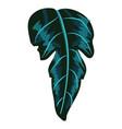 Tropical leaf plant