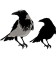 Black Crows vector image vector image