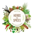 Culinary herbs and spices big set vector image