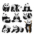 flat set of funny panda in different poses vector image