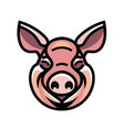 Image of swine head vector image