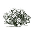 olive tree old engraving ecology environment vector image vector image