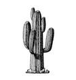 saguaro arborescent tree-like cactus ink vector image