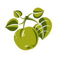 Single green simple apple with leaves ripe sweet vector image vector image