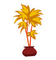 decorative house plant palm in flower pot vector image vector image