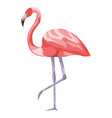 flamingo exotic and tropical bird vector image