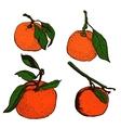 Tangerine sketches vector image