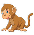 a cute monkey with white background vector image vector image