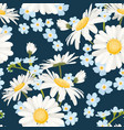 daisy chamomile and forget-me-not field meadow vector image vector image
