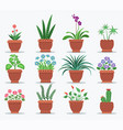 indoor plants and flowers to refresh interior vector image vector image