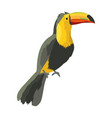 tucan exotic and tropical bird vector image vector image
