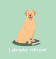 an depicting labrador retriever dog cartoon vector image vector image