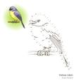 Yellow robin bird learn to draw vector image