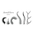 animal horns set hand drawing vintage engraving vector image vector image