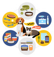 flat pet shop template vector image vector image