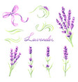 lavender flowers and bunches set watercolor vector image