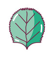 nice organic leaf plant vector image vector image