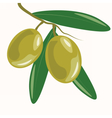 Olive branch with leaves vector image vector image