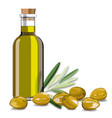 olive oil and olive branch on white background vector image vector image